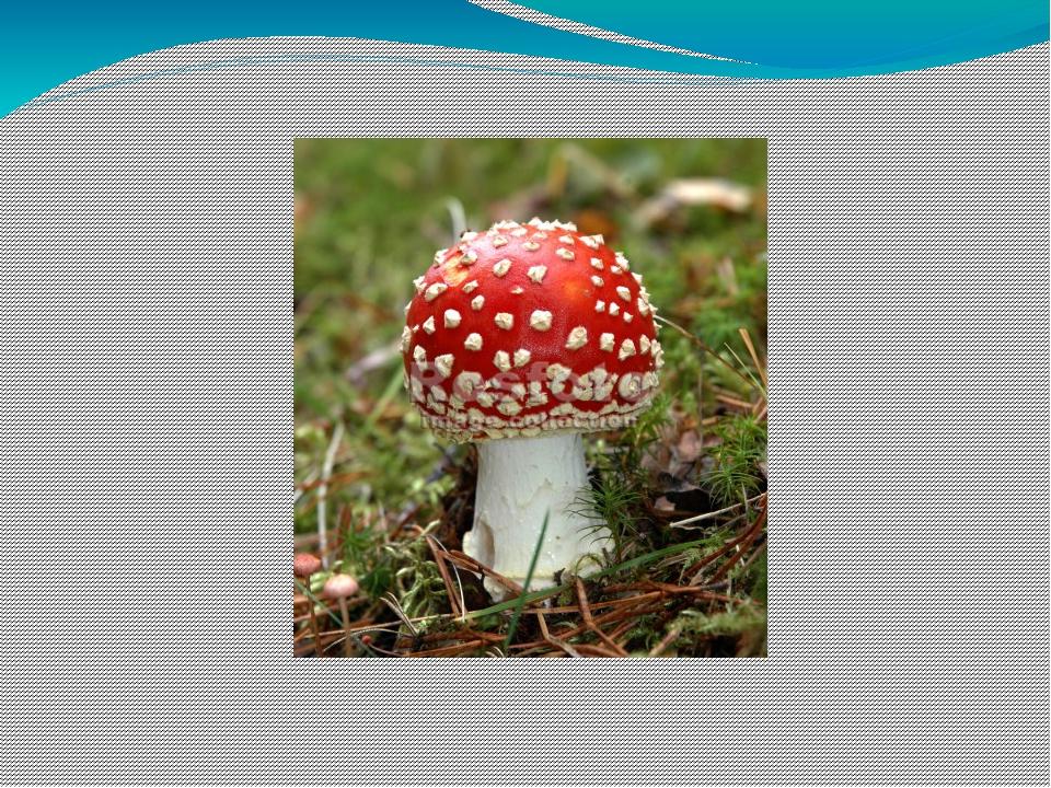 Ядовитые грибы тульской области фото и описание
