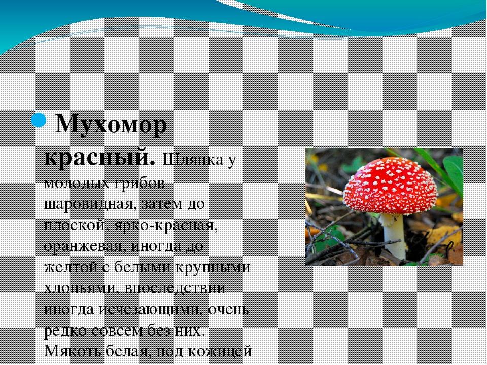 ядовитые грибы и ягоды фото и описание рассказала, что невероятно