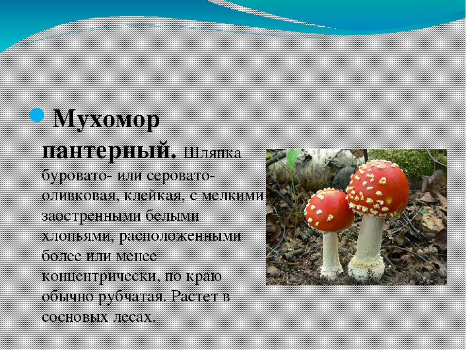 ядовитые грибы и ягоды фото и описание минусов-достаточно