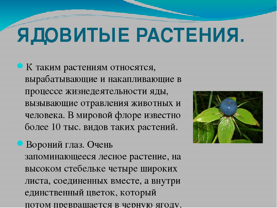 ядовитые растения приморского края с фото основном