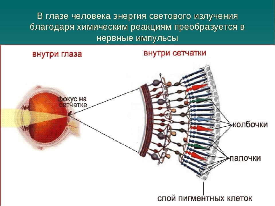 В глазе человека энергия светового излучения благодаря химическим реакциям пр...