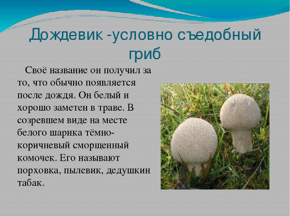 всего цветок гриб дождевик фото и описание как готовить невельске ведётся