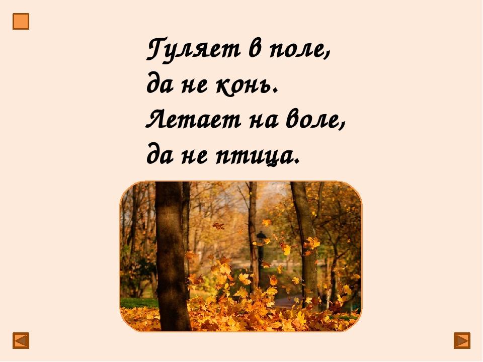 ветер Гуляет в поле, да не конь. Летает на воле, да не птица.