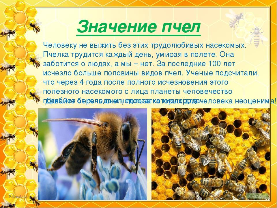 чем полезны пчелы картинки
