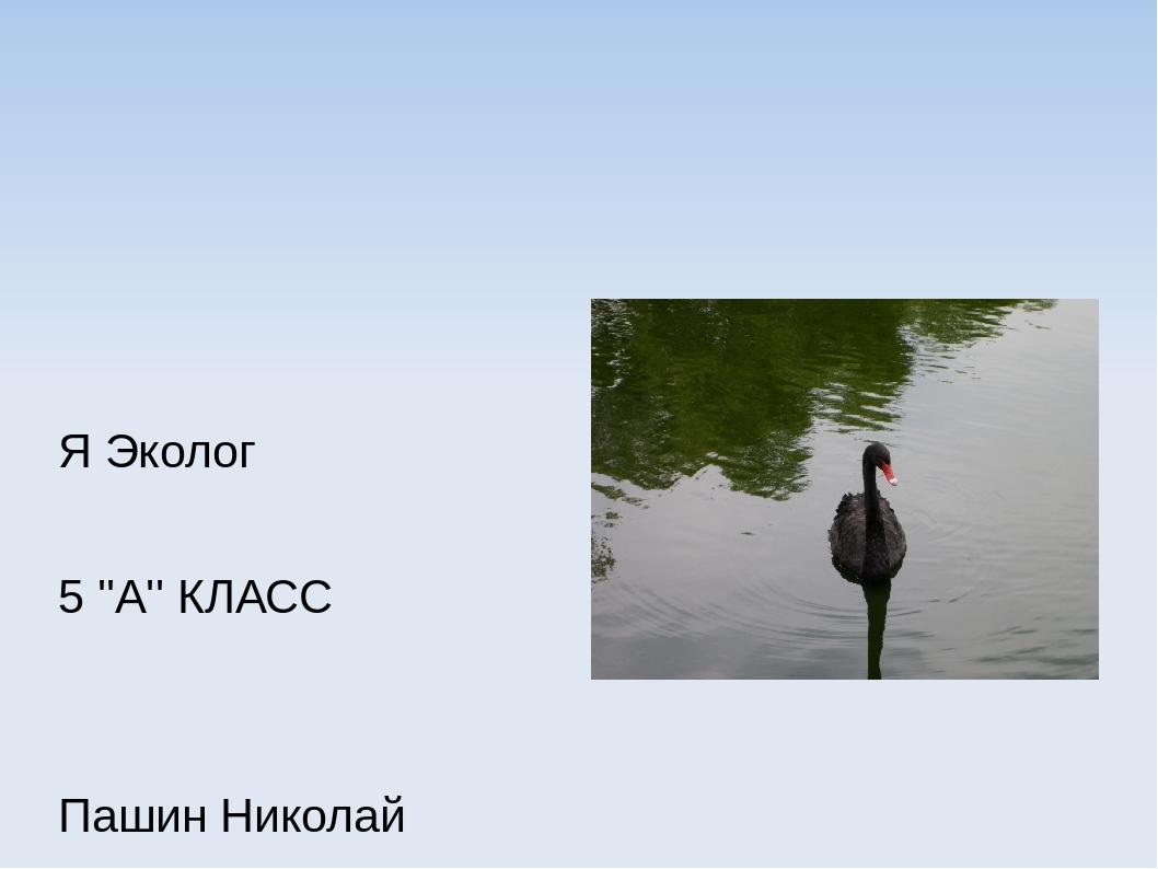 Я Эколог 5 ''А'' КЛАСС Пашин Николай