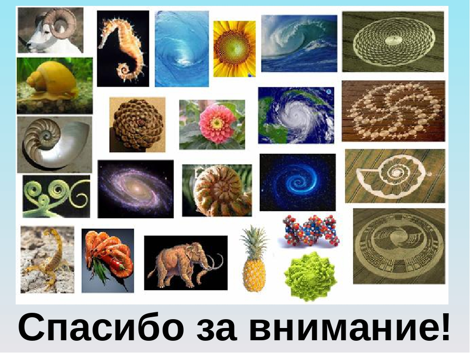 the golden ratio in nature The unique properties of the golden rectangle provides another example this shape, a rectangle in which the ratio of the sides a/b is equal to the golden mean (phi), can result in a nesting process that can be repeated into infinity — and which takes on the form of a spiral it's call the logarithmic spiral, and it abounds in nature.