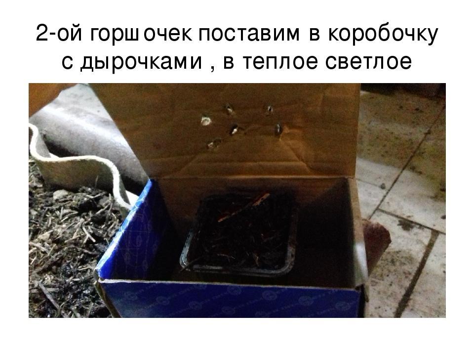 2-ой горшочек поставим в коробочку с дырочками , в теплое светлое место.
