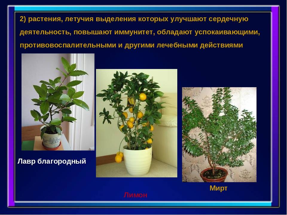 Растения повышающие иммунитет