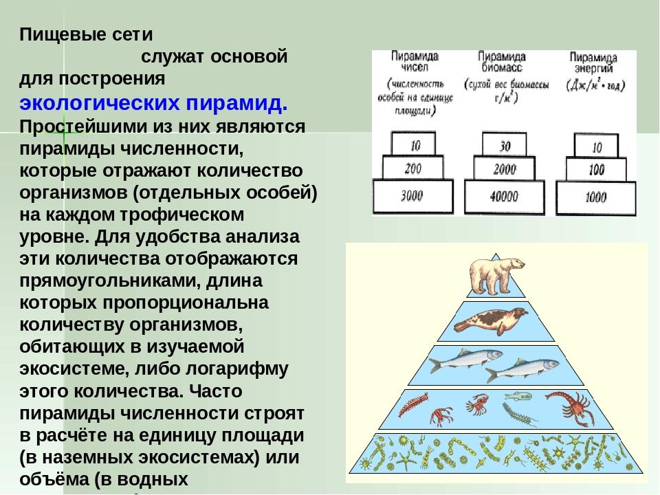 Условие задачи постройте экологическую пирамиду