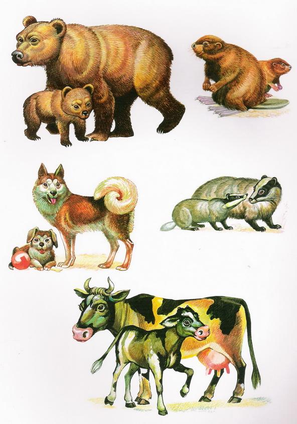дикие и домашние животные картинки к занятию сложные