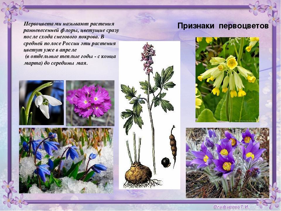 Цветы в средней полосе россии