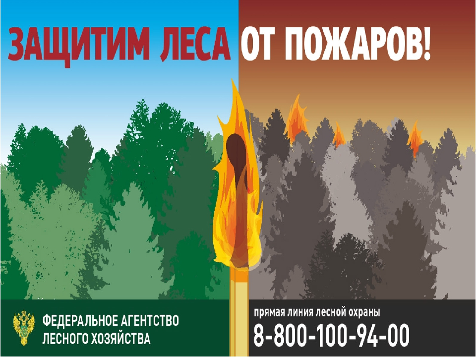 менее, картинки как защитить лес от огня стала настоящим символом