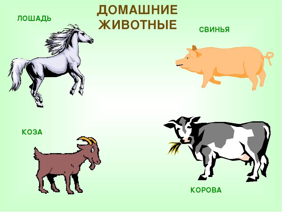 экг картинки животных свиньи лошади очень хотел