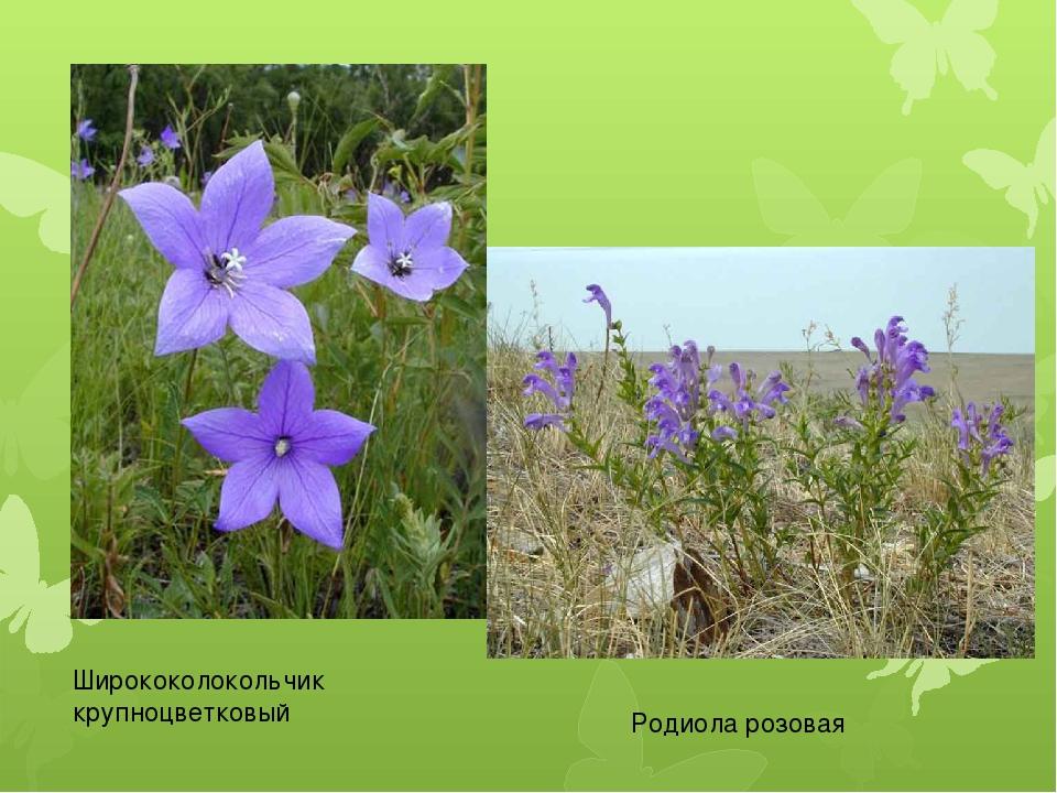 Растения забайкалья фото и описание