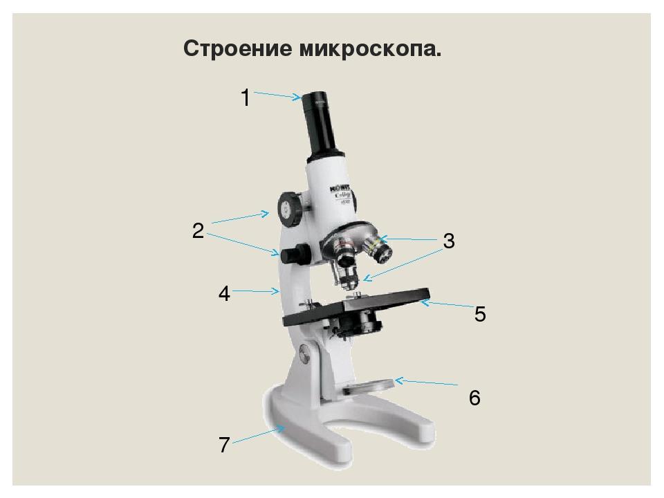 Строение микроскопа. 6 1 5 4 7 3 2