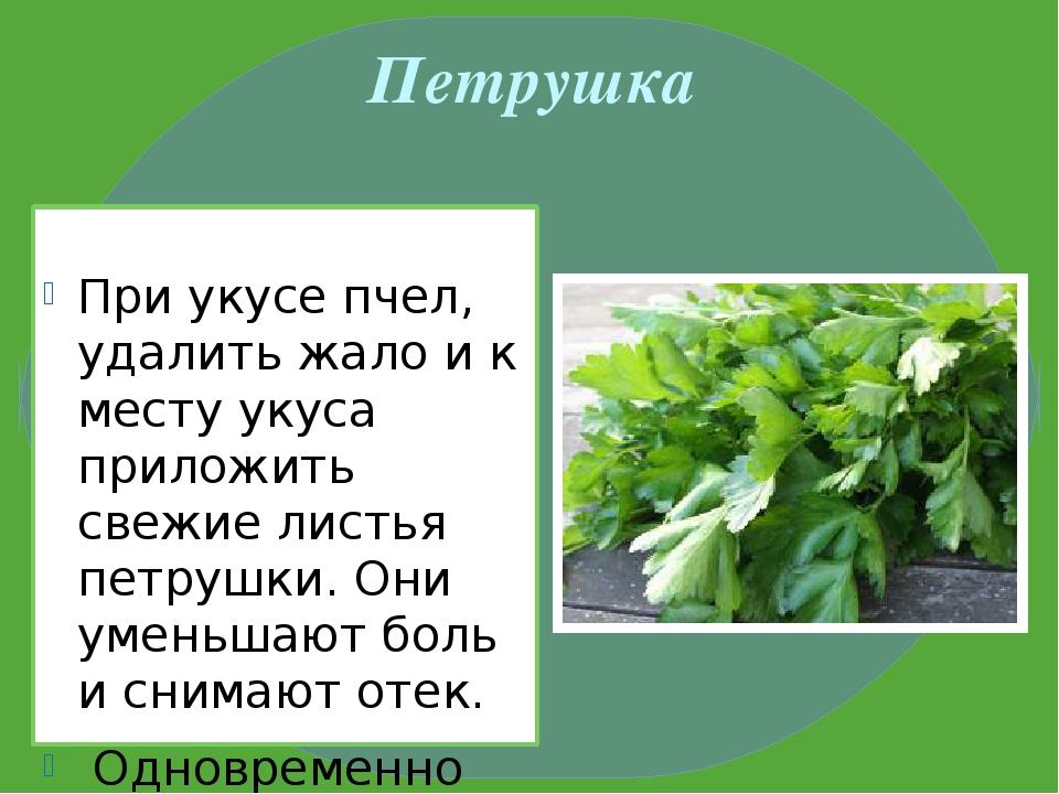 Петрушка При укусе пчел, удалить жало и к месту укуса приложить свежие листья...