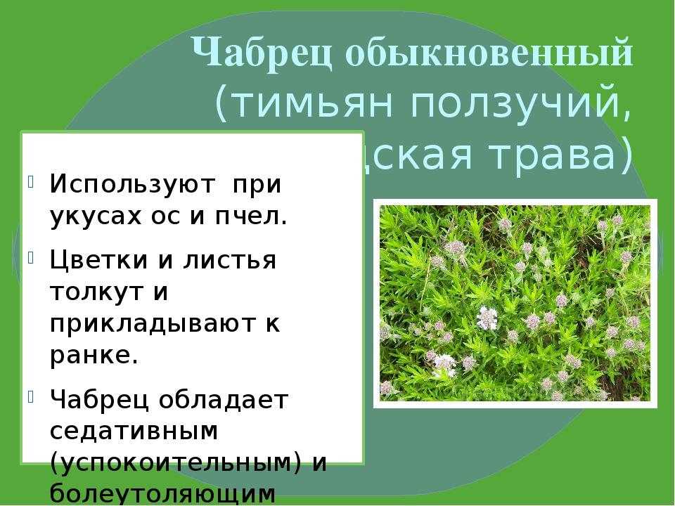 Чабрец обыкновенный (тимьян ползучий, богородская трава) Используют при укуса...