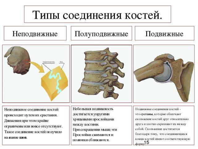 К неподвижному типу соединения костей относится коленный сустав признаки дисплазии тазобедренных суставов фото