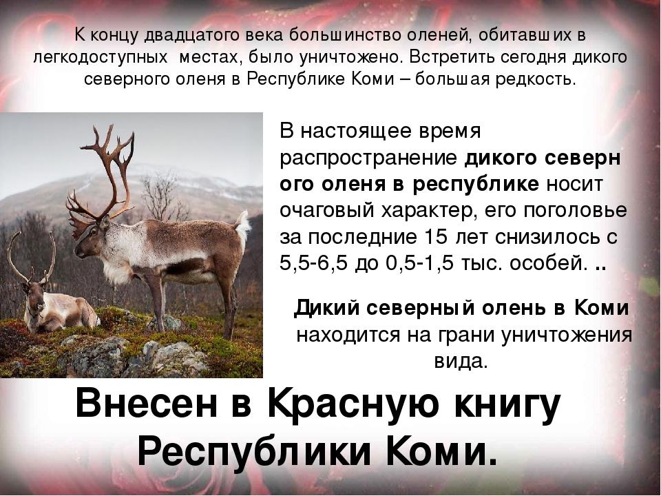 Животные из красной книги республики коми картинки