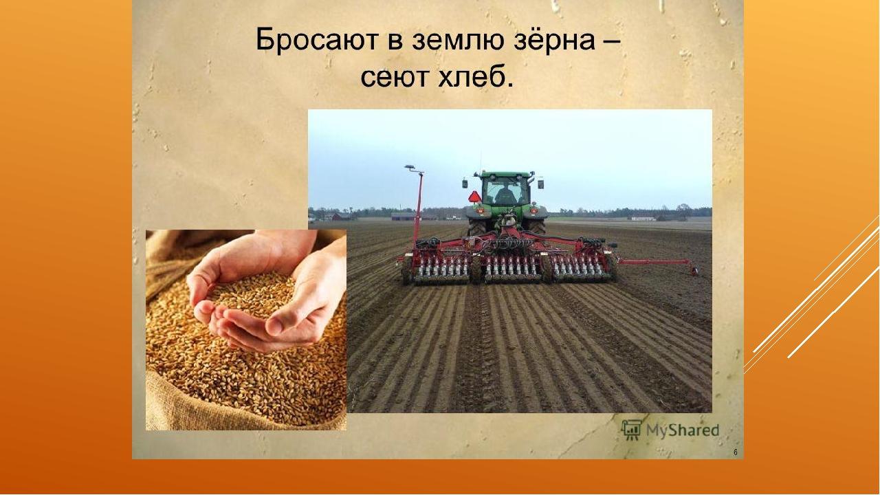 Картинки о посеве хлеба