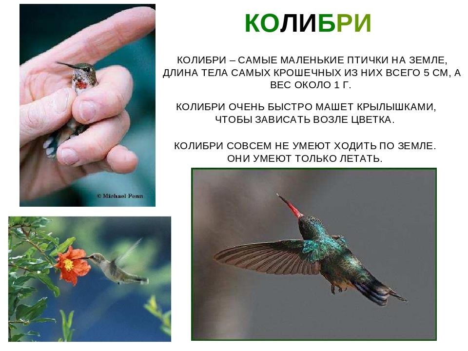 эдгард птица колибри фото и описание открытки день смайлика