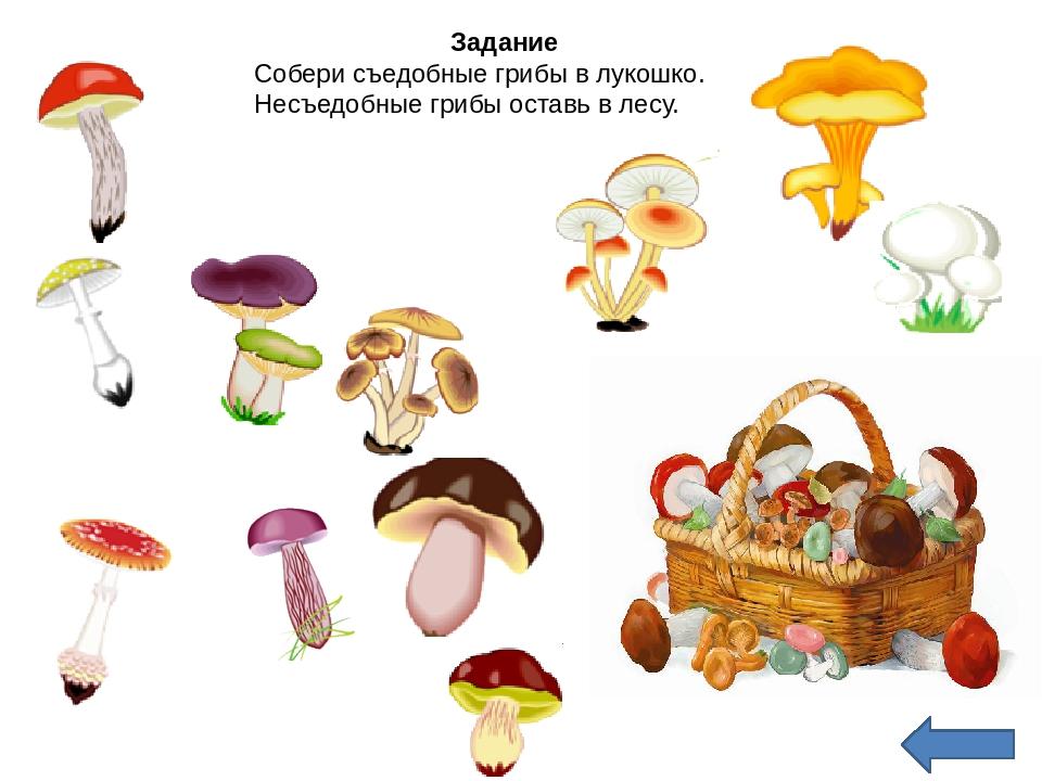 сайте задание грибы картинки даже