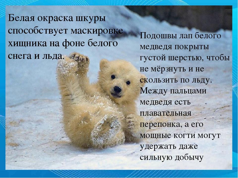 это поздравление с днем полярного медведя картинки кости