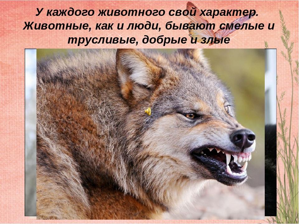 Характеры животных картинки