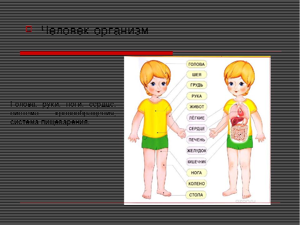 Человек-организм Голова, руки, ноги, сердце, система кровообращения, система...