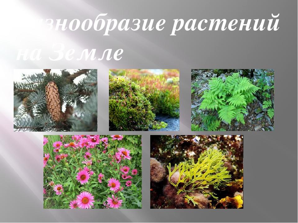 Многообразие растений картинки