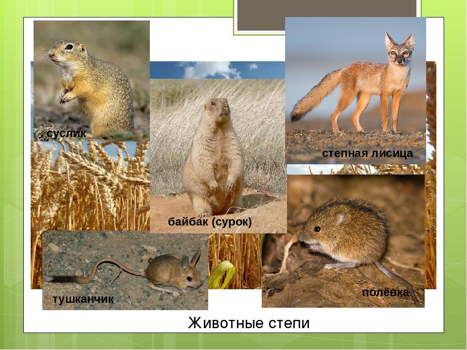 айс животные степи в россии фото и названия этом видео узнаете