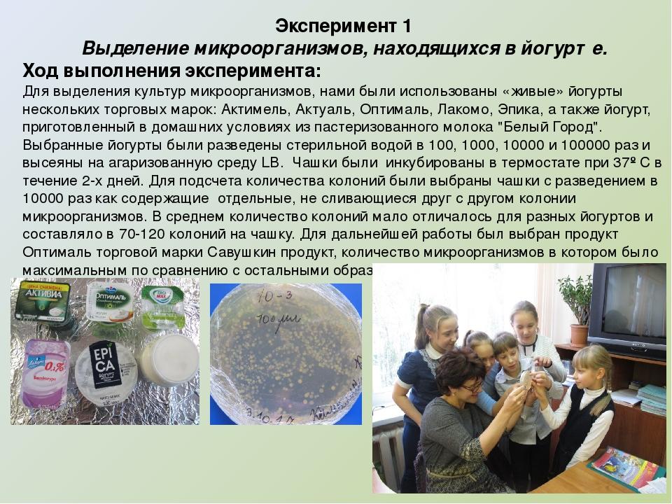 Эксперимент 1 Выделение микроорганизмов, находящихся в йогурте. Ход выполнени...