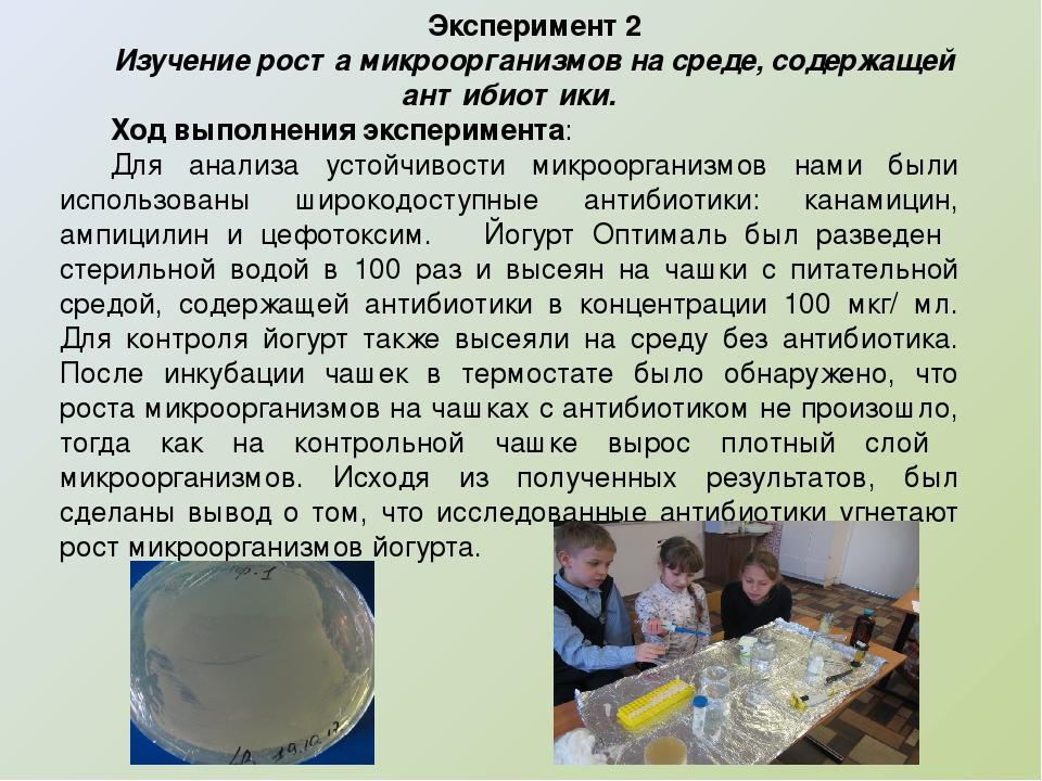 Эксперимент 2 Изучение роста микроорганизмов на среде, содержащей антибиотик...