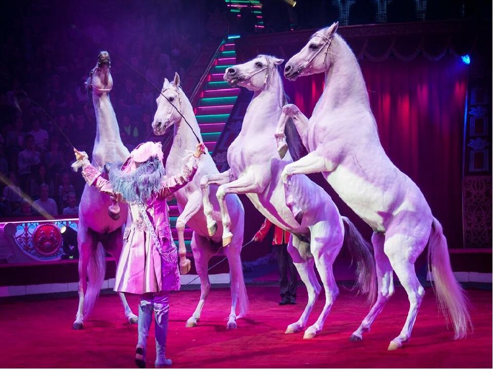 Картинка цирка на цветном