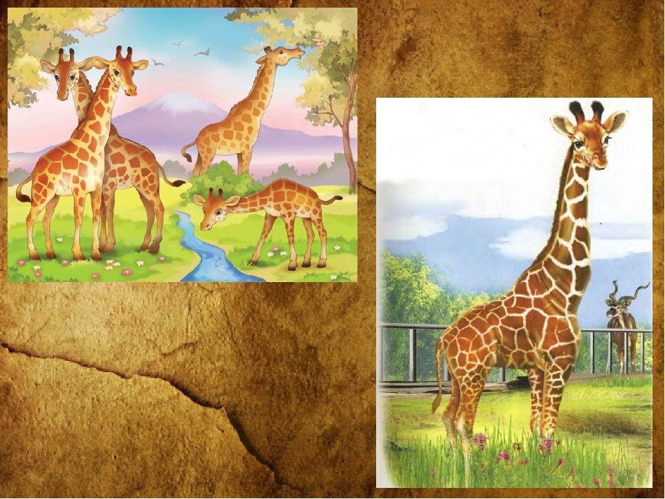 служила сюжетная картинка животные жарких стран жили вдвоём мамой
