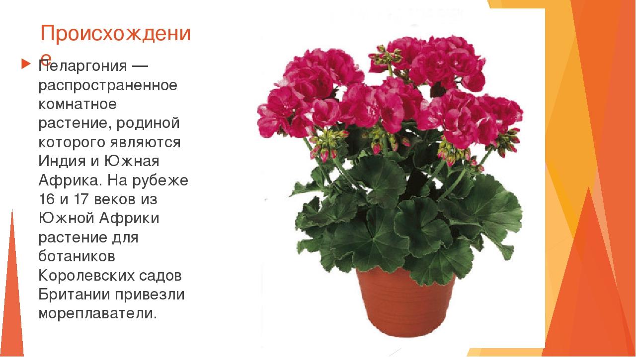 Комнатные растения названия с фото и происхождение
