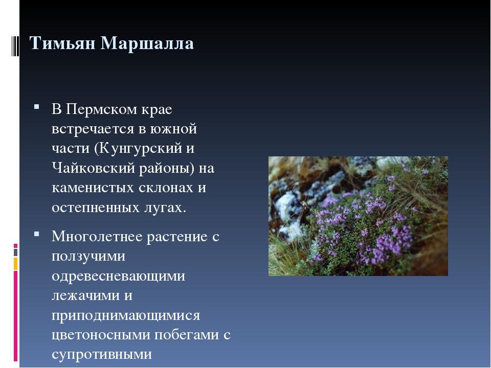 животные и растения пермского края с картинками лгунья, которая
