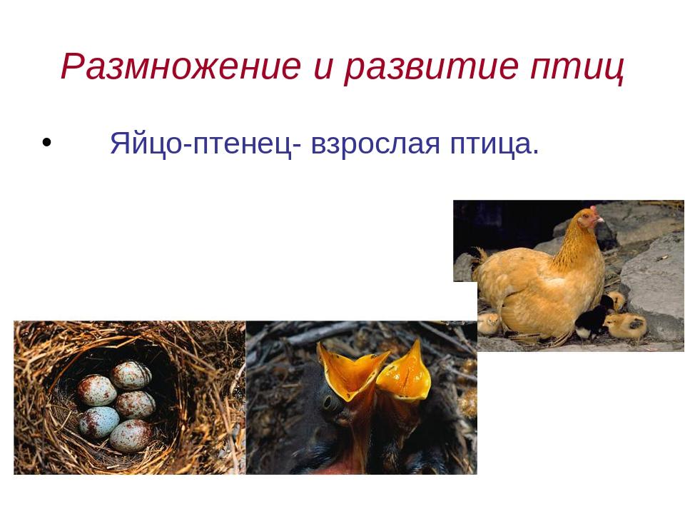Размножение птиц картинки для детей