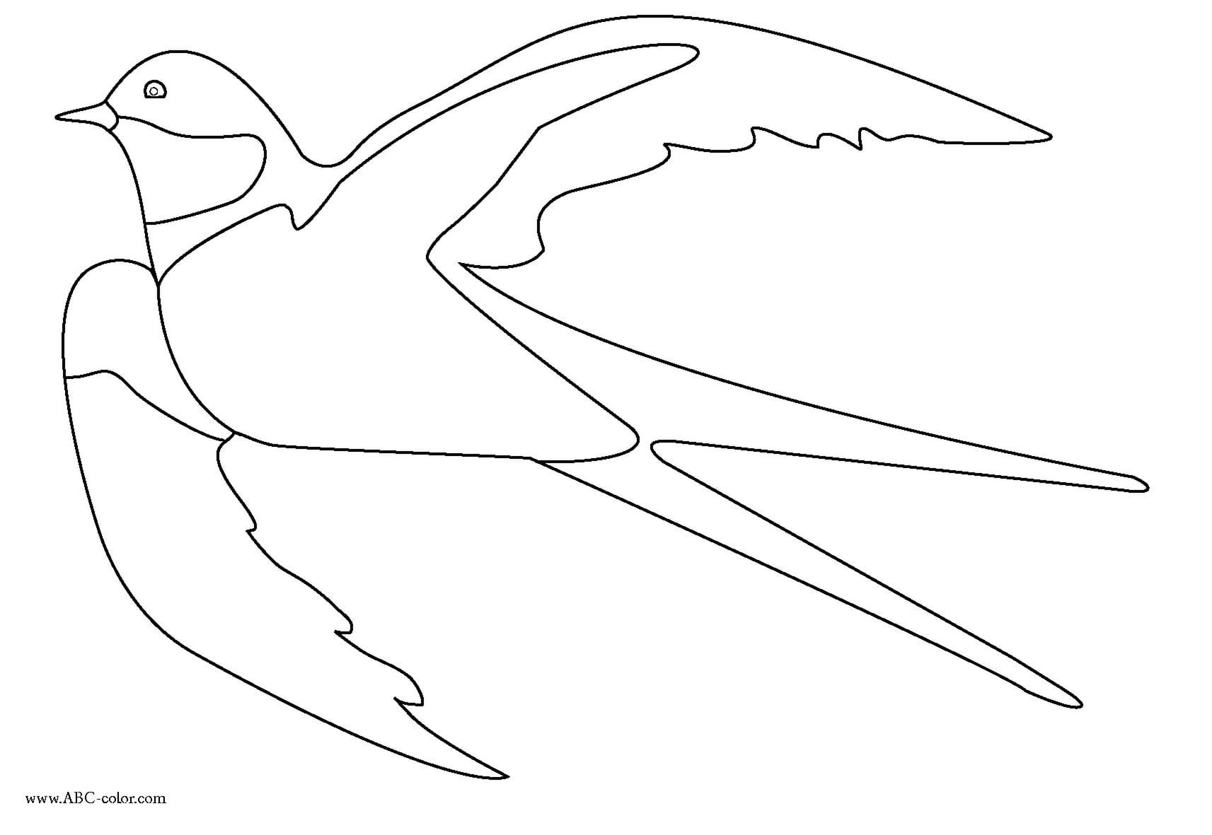 Шаблон птичек