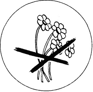 Черно белые картинки что нельзя делать в лесу