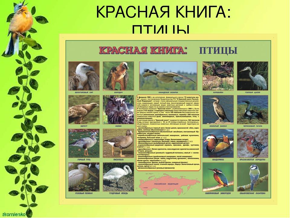 Картинки птиц занесенных в красную книгу с названиями