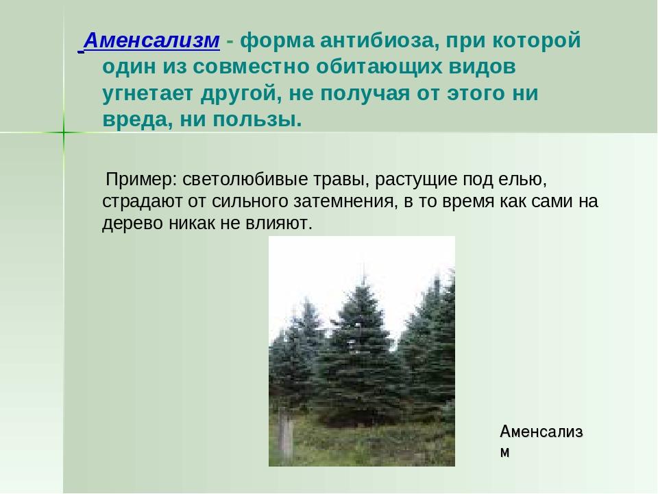 Аменсализм - форма антибиоза, при которой один из совместно обитающих видов...