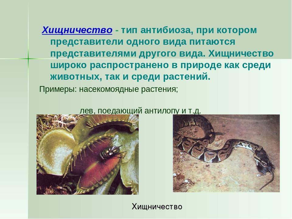Хищничество - тип антибиоза, при котором представители одного вида питаются...