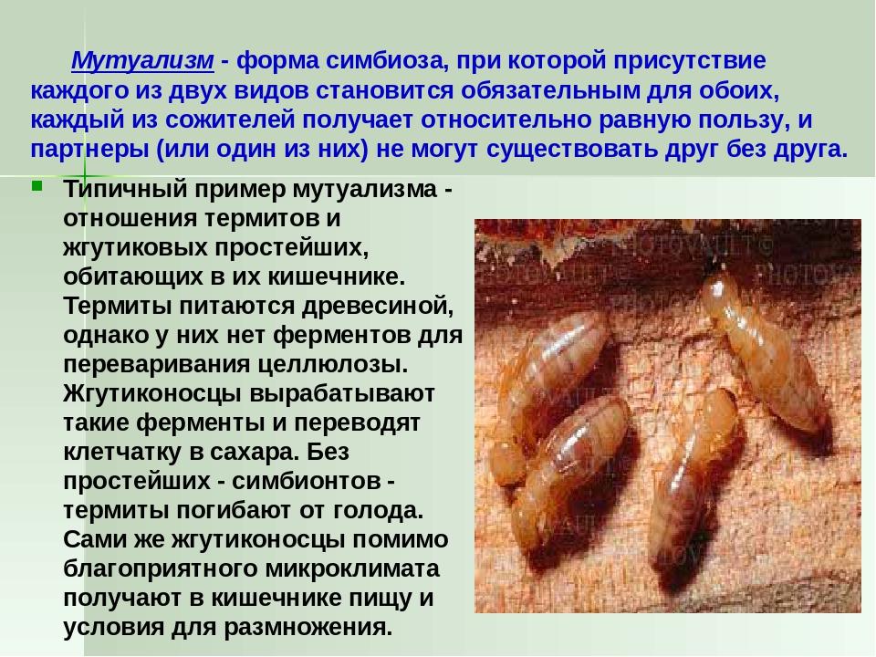 Мутуализм - форма симбиоза, при которой присутствие каждого из двух видов ст...