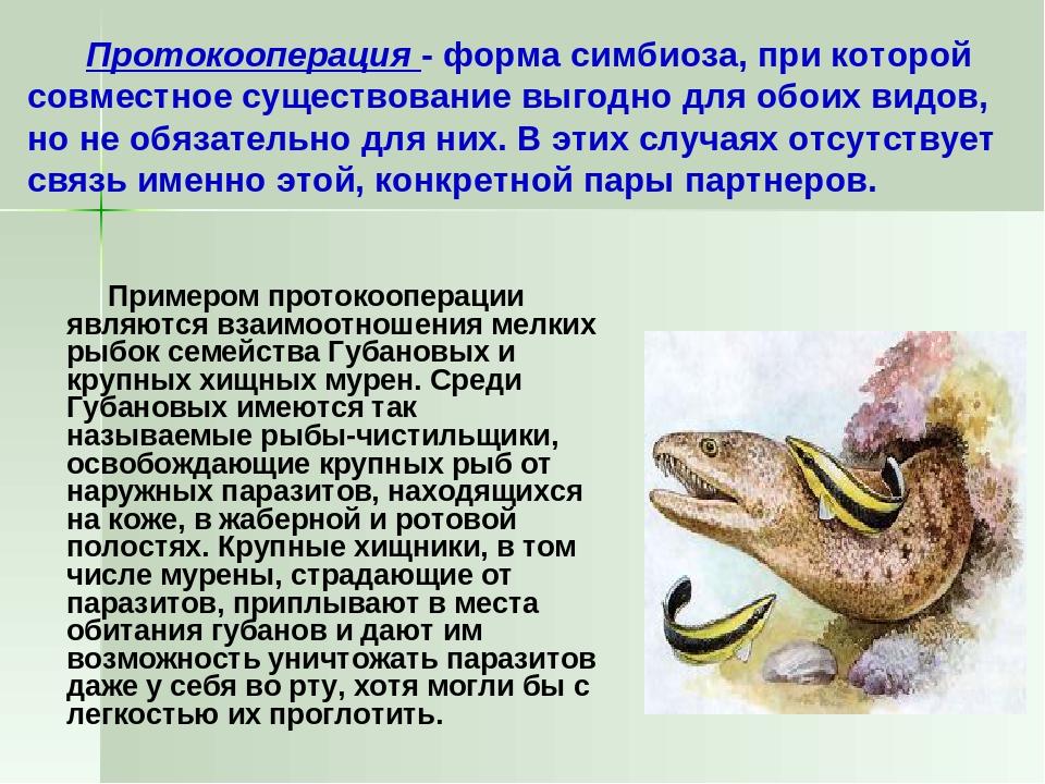 Протокооперация - форма симбиоза, при которой совместное существование выгод...