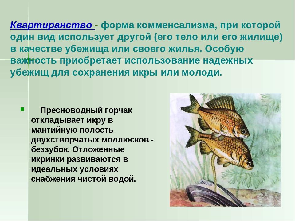 Квартиранство - форма комменсализма, при которой один вид использует другой (...