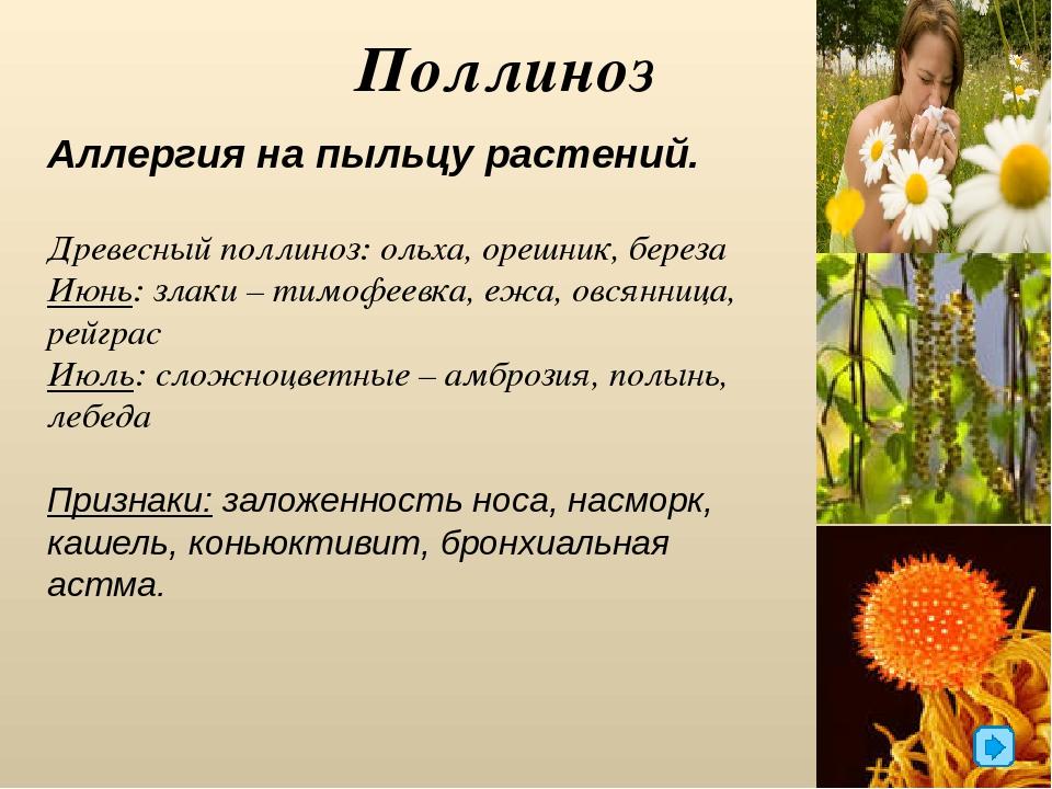 Аллергия на траву в картинках