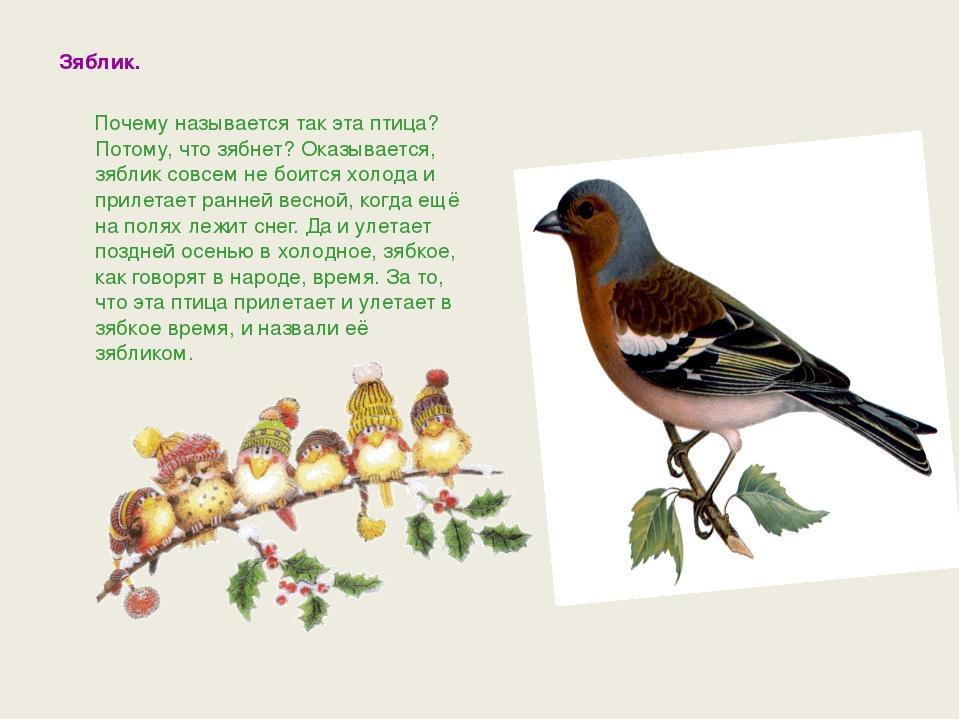 наступлением рассказ птичка с картинками галеоне