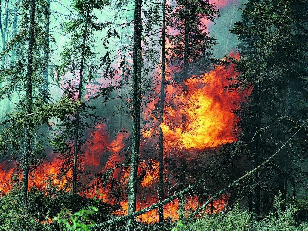 ство, игры уничтожение леса в берендеевом царстве скинуть музыку айфон