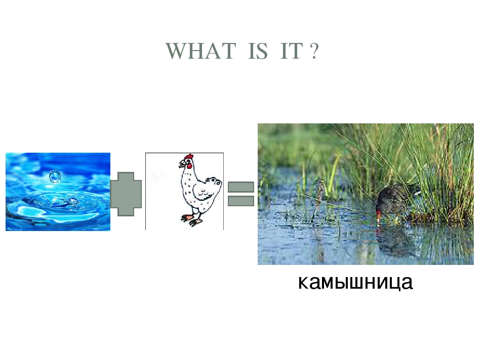 WHAT IS IT ? камышница